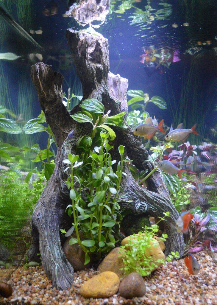A closer look at the interior design of the Spec aquarium in the Fluval display.