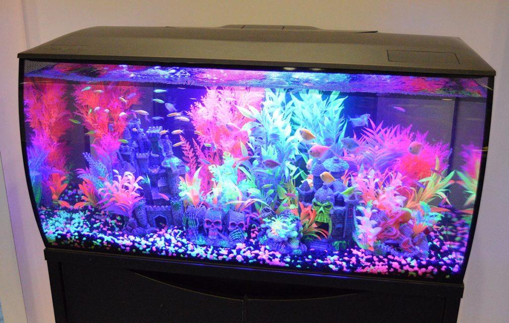 Another take on how to aquascape a black Fluval Flex aquarium.