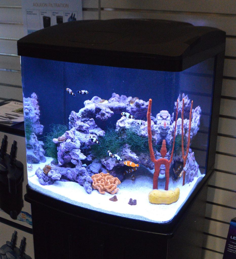 A Coralife LED BioCube on display with Aqueon is a classic all-in-one entry point to the reef aquarium hobby.