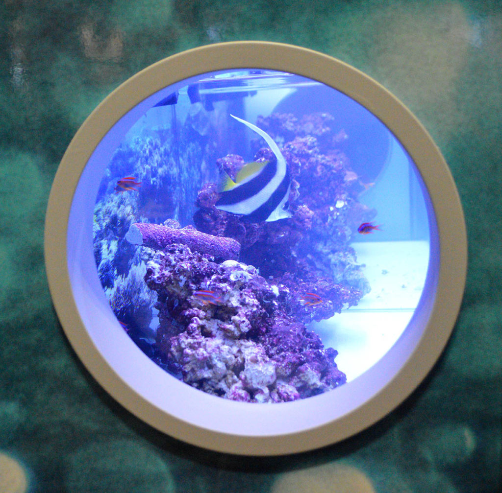 A viewing portal through the side of a commercial-style display housing marine fish from Segrest Farms.