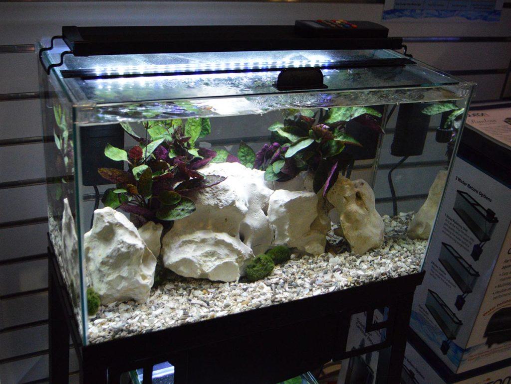 A rimless aquarium from Aqueon.