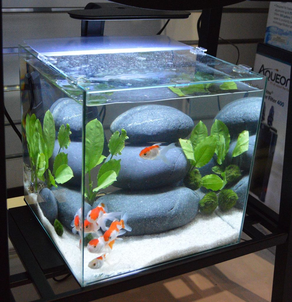 Underneath the larger rimless aquarium from Aqueon, we found this smaller rimless cube tank with goldfish.