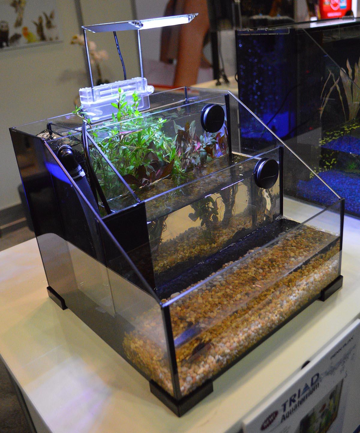The new Triad Aquaterrarium from Penn-Plax unique take on the nano desktop aquarium.