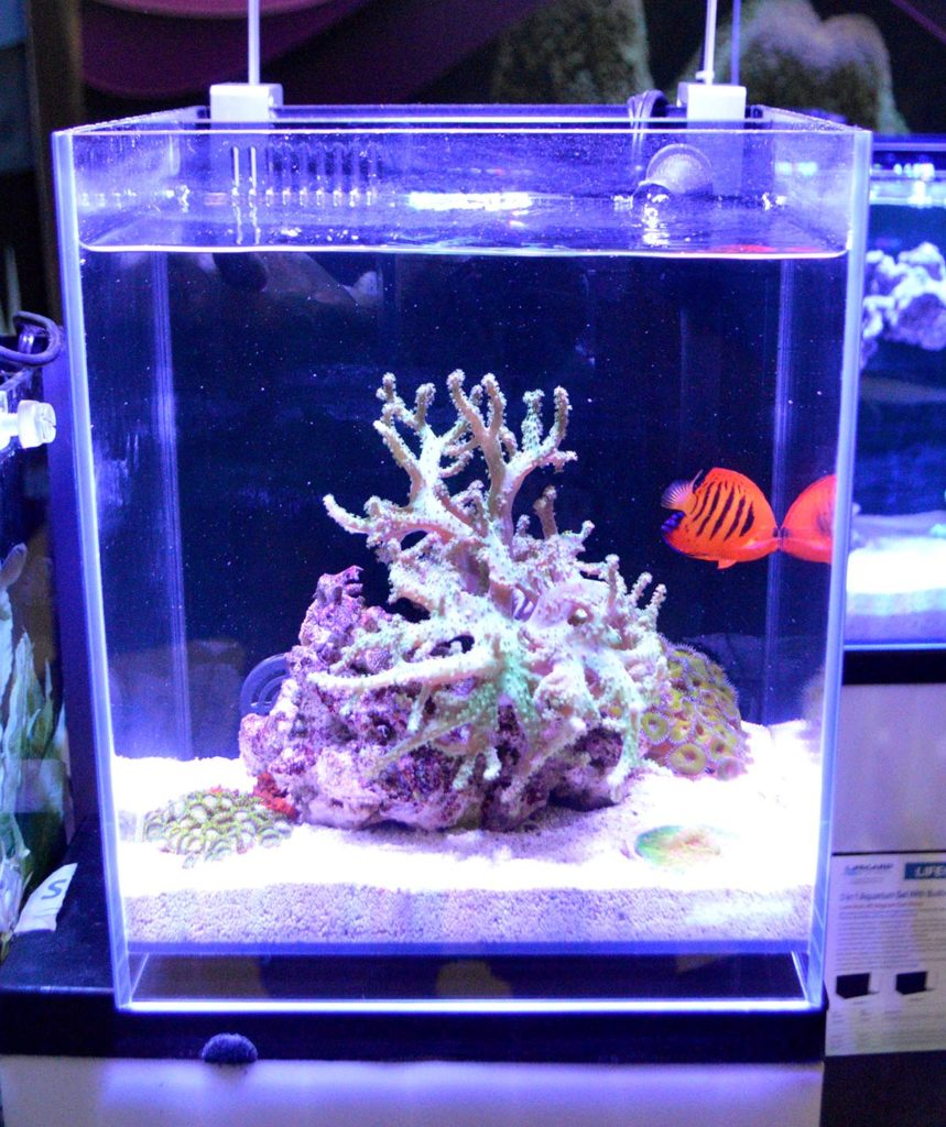 A nano-reef display at Dr. Tim's Aquatics featuring Lifegard's Crystal Aquariums Elevated Series, which raises the bottom pane of the aquarium up off the stand to give a unique appearance.