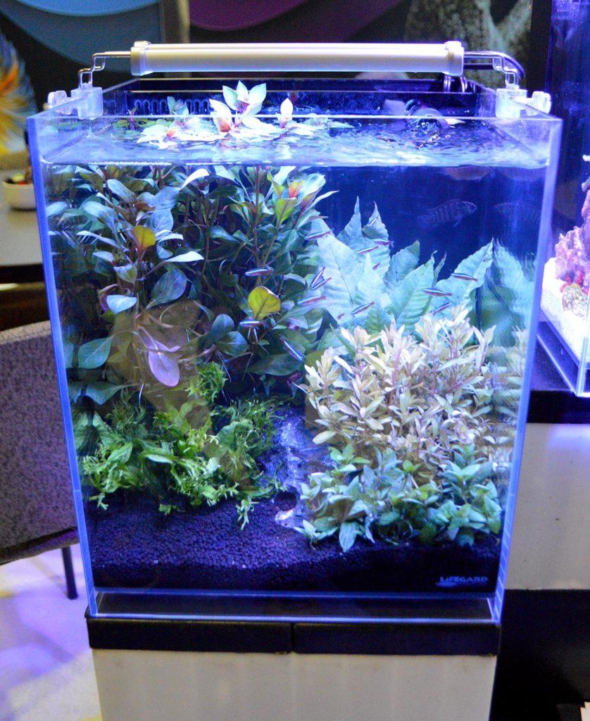 One last look at this Elevated Aquarium from Lifegard Aquatics.