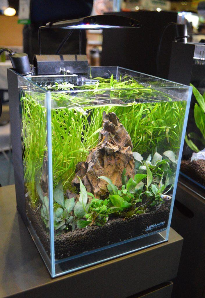 The 2.65 Gallons Betta Low Iron Ultra Clear Aquarium R460052 from LifeGard Aquatics.