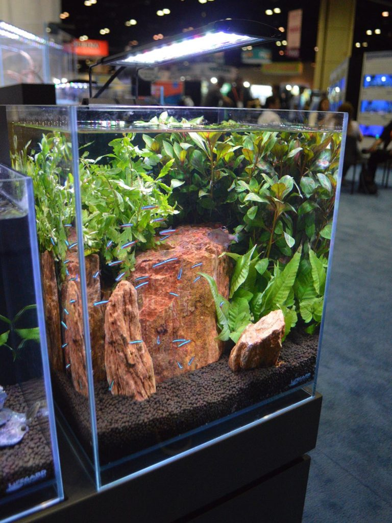 And the largest in the product line, the 8.3 Gallons Elevated Low Iron Ultra Clear Aquarium R460051 from Lifegard Aquatics.