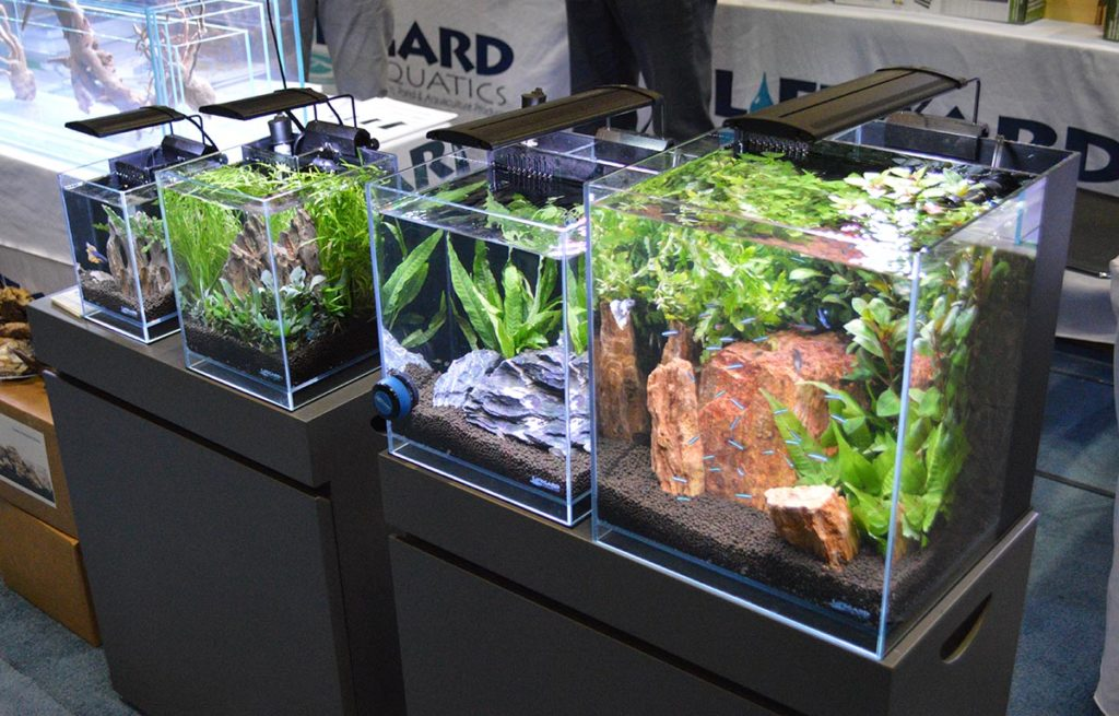 Several Elevated Low Iron Ultra Clear Aquariums from Lifegard were on display at the Dr. Tim's Aquatics booth.