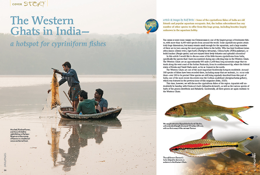 "The Western Ghats in India—a hotspot for cypriniform fishes? So says Ralph Britz, who starts by noting, ""Some of the cypriniform fishes of India are old friends and popular aquarium occupants. But, the Indian subcontinent has any number of other species to offer from this huge group, including beauties largely unknown in the aquarium hobby."""