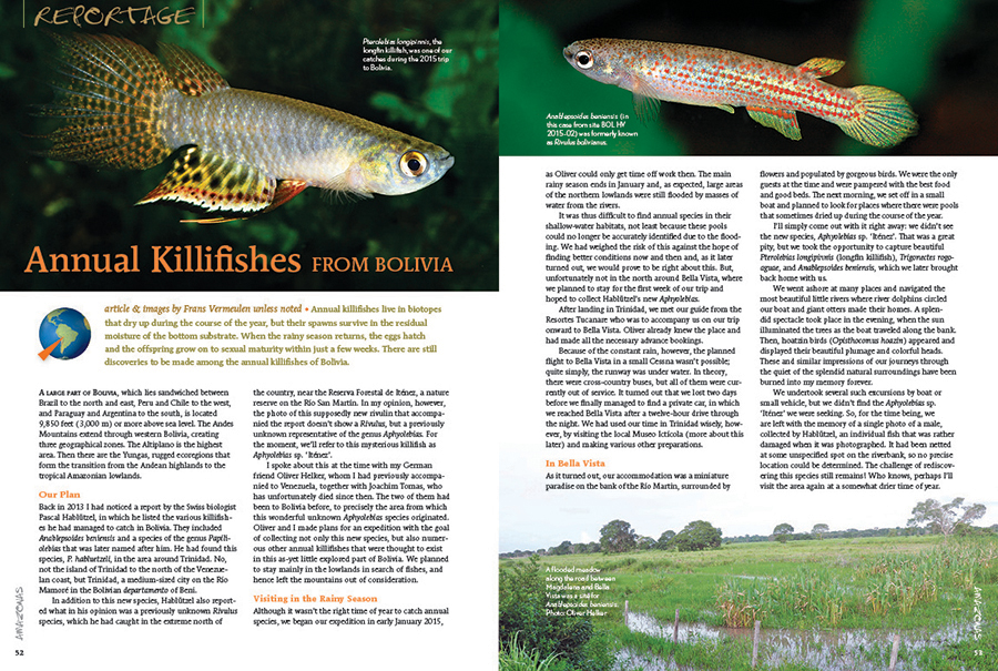 Continuing our coverage of South American adventures, Frans Vermeulen is off in search of new and rare species of Bolivian Killifishes.