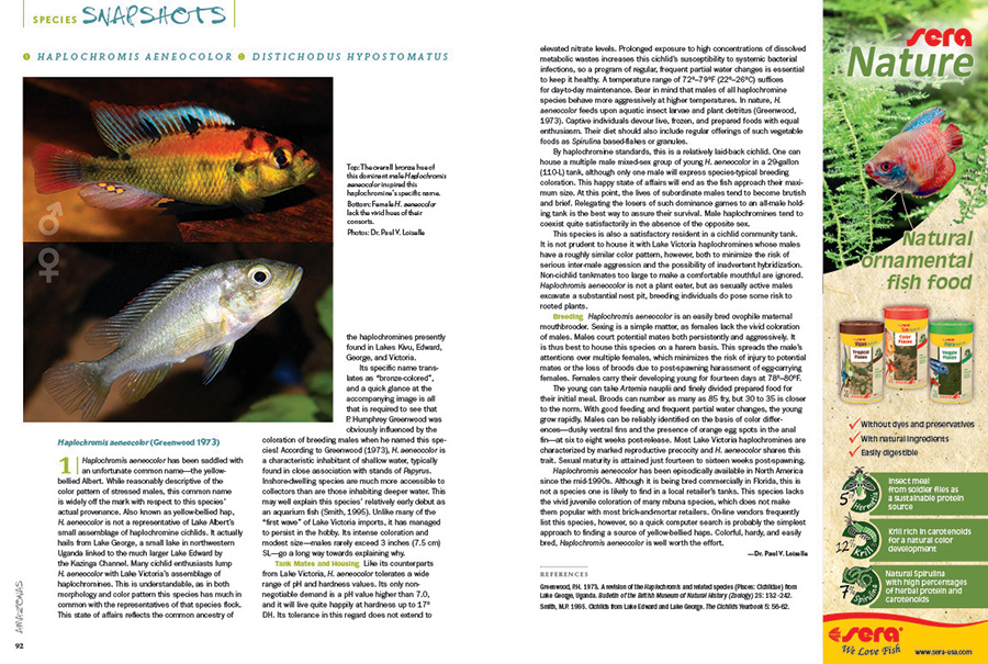 "We round out every issue with AMAZONAS' Species Snapshots—concise glimpses at rare and unusual fishes showing up in the aquarium trade and hobbyist circles. In our latest installment, we give expanded coverage to two very unique species; Dr. Paul V. Loiselle makes the case for the striking ""Victorian-type"" Haplochromis aeneocolor from Lake George, and Anton Lamboj introduces us to the subtle beauty of a true African rarity, Distichodus hypostomatus."