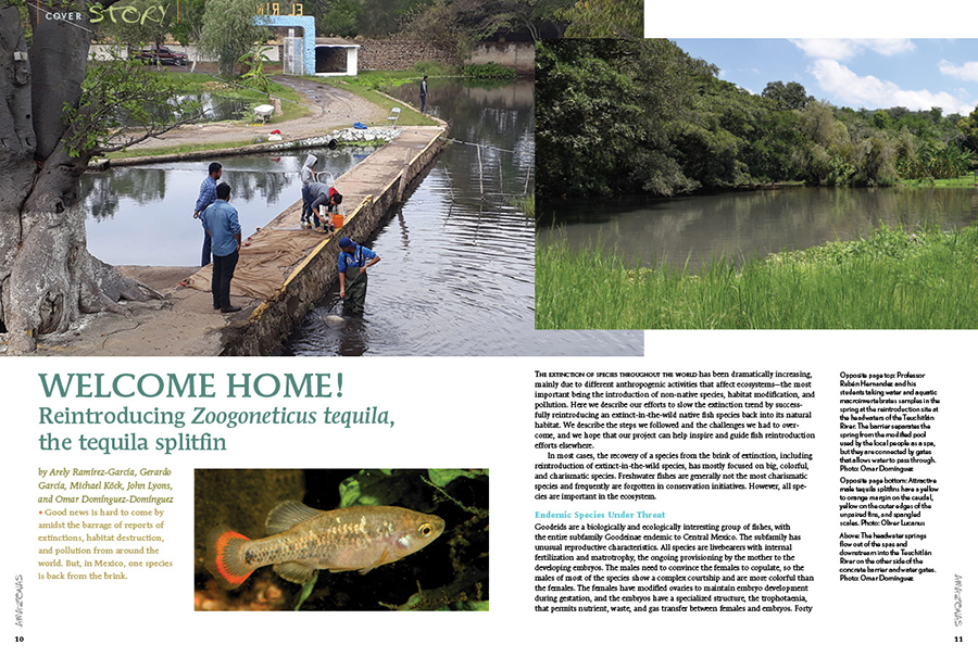 Good news is hard to come by amidst the barrage of reports of extinctions, habitat destruction, and pollution from around the world. But, in Mexico, one species is back from the brink. WELCOME HOME! Reintroducing Zoogoneticus tequila, the tequila splitfin by Arely Ramírez-García, Gerardo García, Michael Köck, John Lyons, and Omar Domínguez-Domínguez