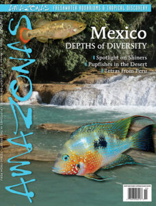 This Species Snapshot was first published in AMAZONAS Magazine, Volume 9, Number 5, MEXICO: Depths of Diversity, our September/October 2020 issue. Never miss our exclusive coverage of rare and unusual aquarium fish when you subscribe to AMAZONAS!
