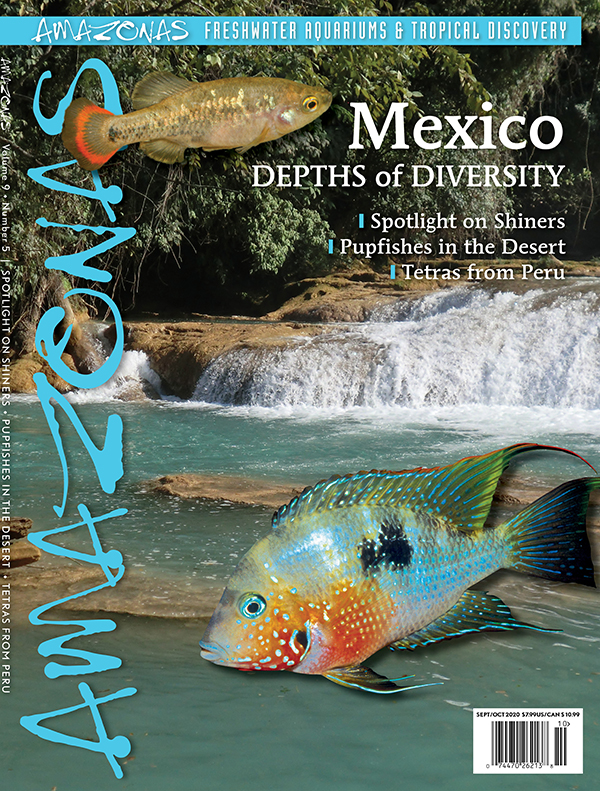 AMAZONAS Magazine, Volume 9, Number 5, MEXICO: Depths of Diversity, on sale August 4th, 2020! On the cover: Río Agua Azul, Chiapas, Mexico, Photo by John Lyons; tequila splitfin (Zoogeneticus tequila), Photo by Oliver Lucanus; spot cheek cichlid (Thorichthys maculipinnis 'Río de la Lana'), Photo by Uwe Werner Wolf.