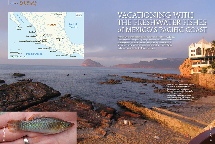 The Pacific Coast of Mexico conjures up images of white sand beaches with crashing waves, beautiful sunsets, and glittering resorts such as Mazatlán, Puerto Vallarta, Ixtapa, and Acapulco. It is all of that and much more for the freshwater hobbyist; join author John Lyons as he takes you Vacationing with the Freshwater Fishes of Mexico's Pacific Coast.