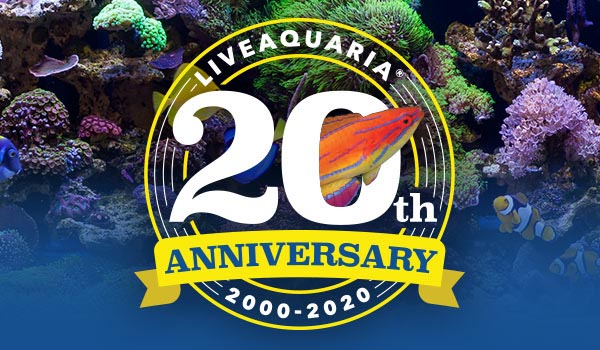 Celebrating its 20th anniversary during July, 2020, LiveAquaria is about to enter an new chapter as parent company Petco announces a transition to new ownership for the aquarium livestock company.