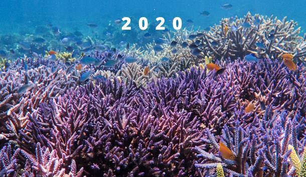 Hatamin Island Project, 2020