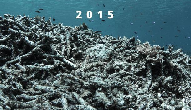 Hatamin Island Project, 2015.