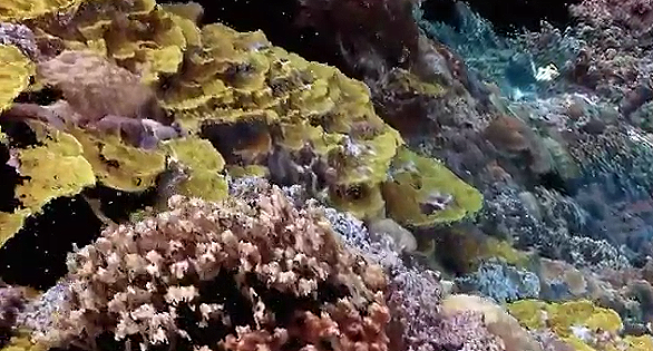 Astonishing New Reef Video from Dr. Bruce Carlson