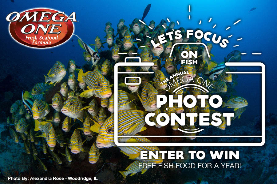 Let's Focus On Fish! OmegaSea's 10th Annual Photo Contest starts now. Photos will be accepted until October 1st, 2020.