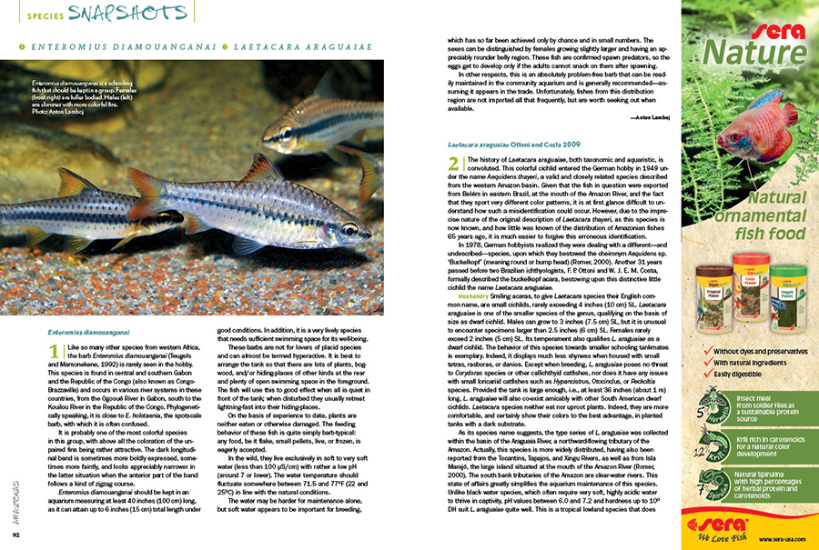 We round out every issue with AMAZONAS' Species Snapshots—concise glimpses at rare and unusual fishes showing up in the aquarium trade and hobbyist circles. In our latest installment, we give expanded coverage to two very unique species; Anton Lamboj brings us a look at a barb from western Africa, Enteromius diamouanganai, and Dr. Paul V. Loiselle shares the striking, rainbow-hued buckelkopf acara, Laetacara araguaiae.