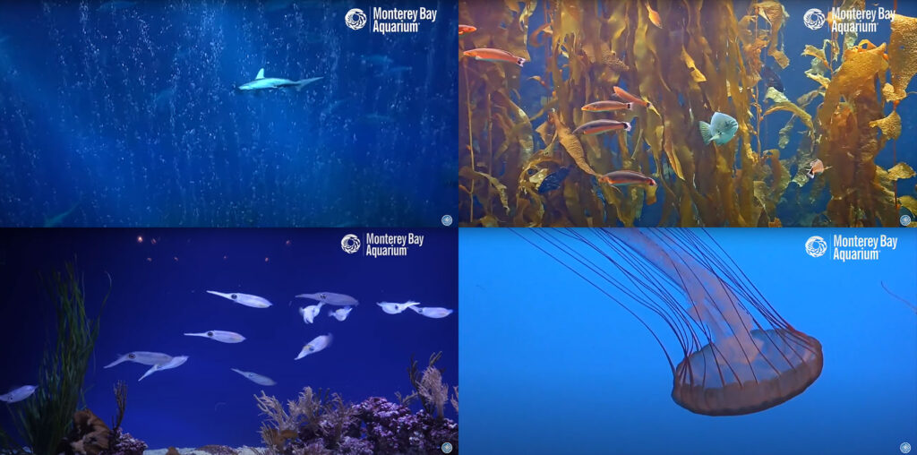 A summer of new video releases and live cams brings relaxation, and the Monterey Bay Aquarium, into your own home.