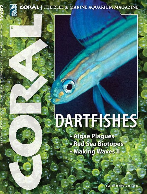 Cover of CORAL Magazine Volume 17, Issue 5 – DARTFISHES – September/October 2020. On the cover: Lined Dartfish, Ptereleotris grammica: Yoshi Hirata/BluePlanetArchive.com. Background: Sea grapes algae, Caulerpa lentillifera: Kitzcorner.