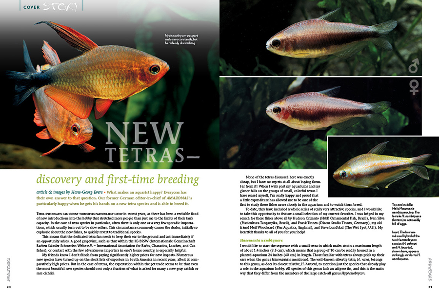 their own answer to that question. Our former German editor-in-chief of AMAZONAS, Hans-Georg Evers, is particularly happy when he gets his hands on a new tetra species and is able to breed it.