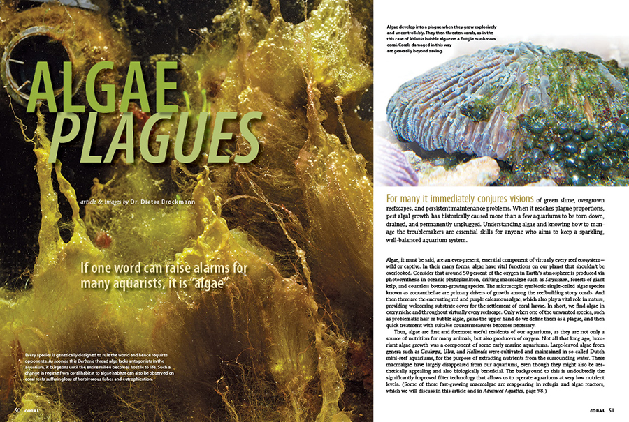 "If one word can raise alarms for aquarists, it is ""algae."" Dr. Dieter Brockmann examines the causes and resolutions to many forms of algae plagues in the modern reef aquarium."