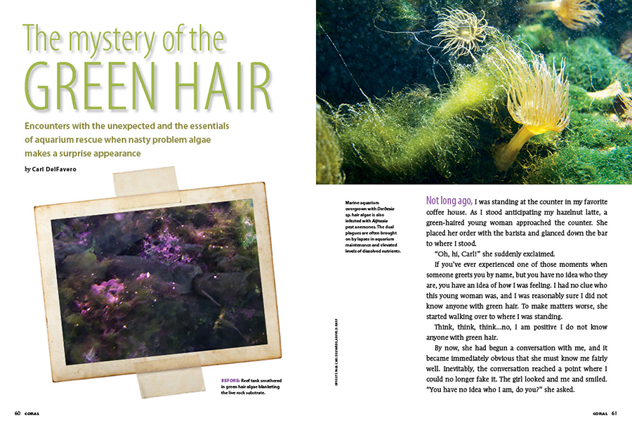 Carl DelFavero tackles one of the most fundamental scourges of the marine aquarium, addressing the mystery of the green hair algae. Learn how to remove the green mask and reveal the aquarium you once knew.