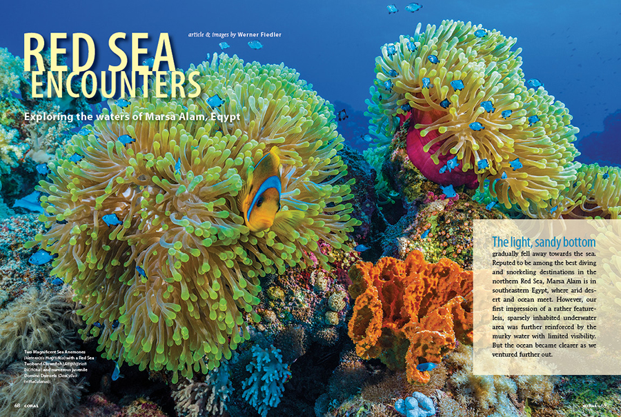 While international travel remains a challenging affair in the ongoing pandemic, CORAL Magazine will bring you to the stunning coral reefs of the Red Sea, and all you need is a magazine in your hands or a digital subscription! Join Werner Fieldler in the waters off Marsa Alam, Eqypt.