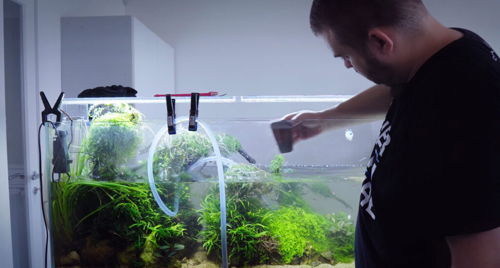 Professional aquarist József Nagy (Joseph), a maintenance expert for Green Aqua in Hungary, tends to an approximately 60 gallon (240 L) planted aquarium installation in an office setting.
