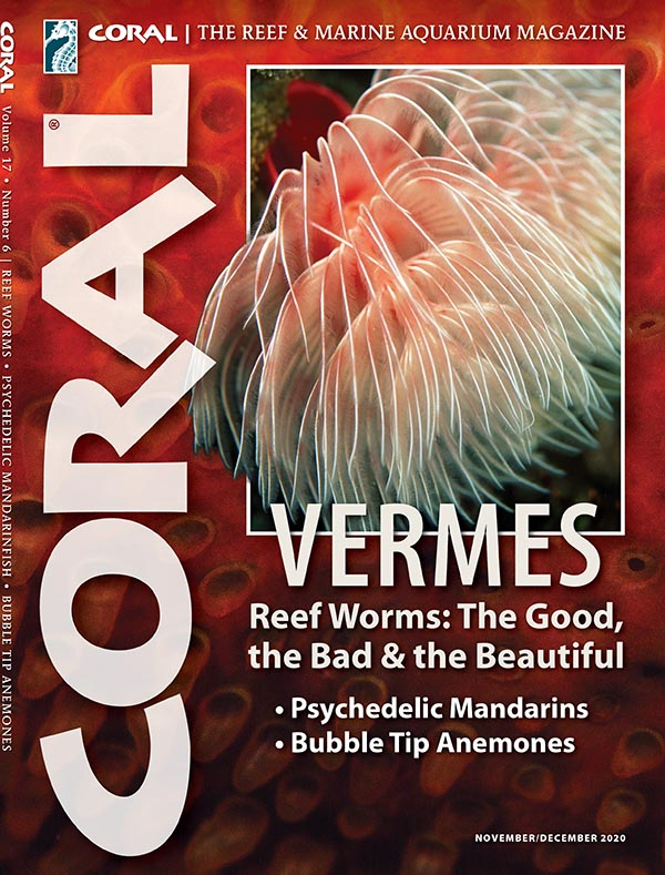 The full article appears in the November/December 2020 issue of CORAL Magazine, VERMES.