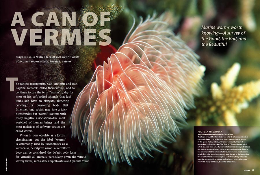 """CORAL New Issue """"VERMES"""