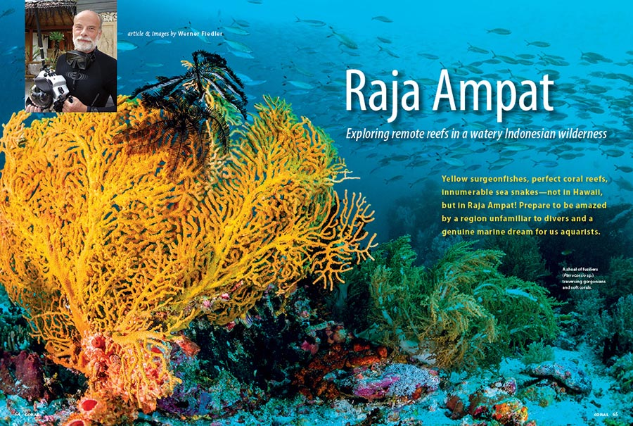 Yellow surgeonfishes, perfect coral reefs, innumerable sea snakes—not in Hawaii, but in Raja Ampat! Join Werner Fiedler, and prepare to be amazed by a region unfamiliar to divers and a genuine marine dream for us aquarists.
