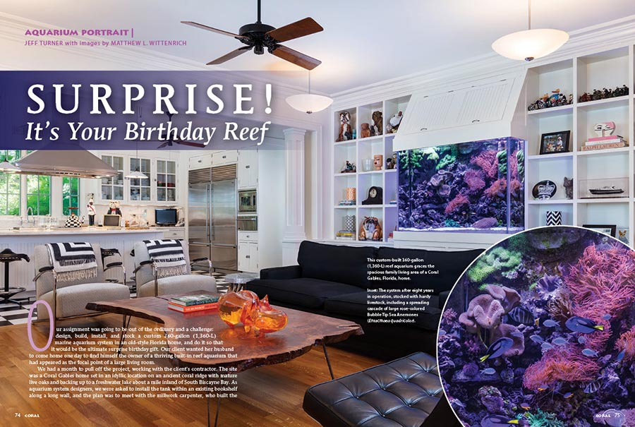 The client wanted her husband to come home one day to find himself the owner of a thriving built-in reef aquarium that had appeared as the focal point of a large living room. Reef Aquaria Design had just 30 days to pull of the ultimate surprise birthday gift. Jeff Turner tells all.