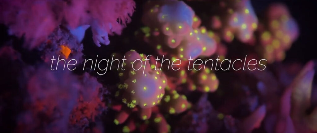 The Night of the Tentacles is the latest video offering from the creative minds at Reef Patrol.