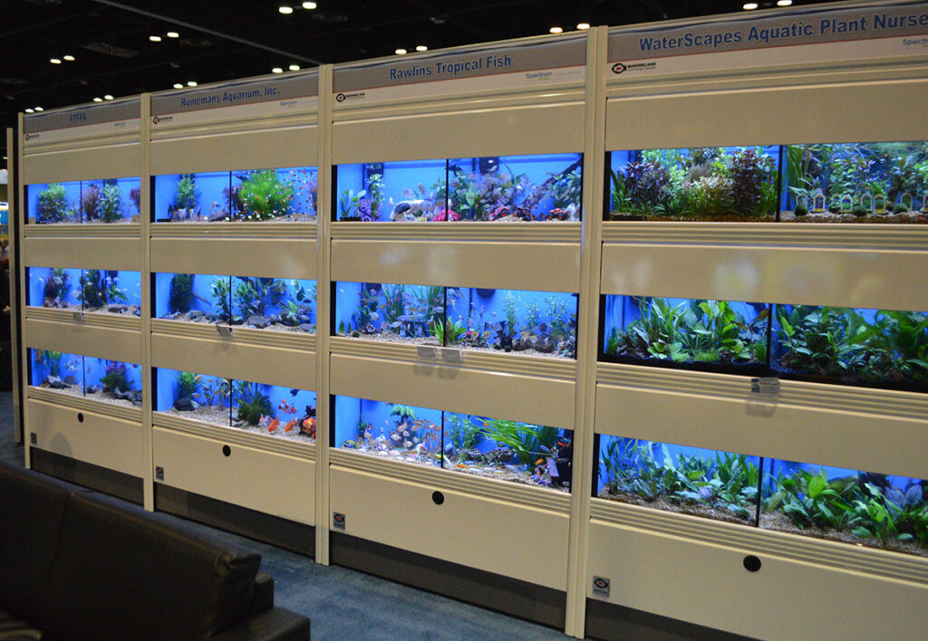 Florida, in particular, is the main hub of ornamental fish production in the US. Shown here, a small portion of the Aquatics Lounge display, organized by the Florida Tropical Fish Farmers Association (FTFFA) at the 2020 Global Pet Expo in Orlando, FL, just before the COVID-19 Pandemic started to shut everything down.