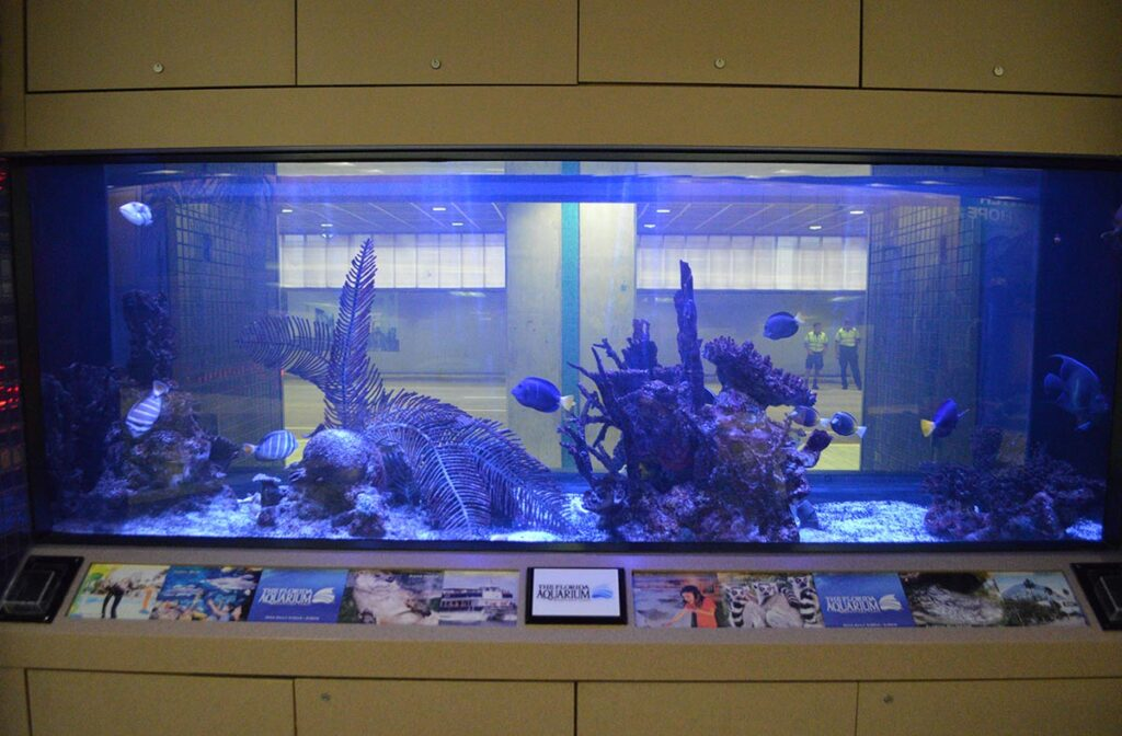 A massive marine aquarium on display at Tampa International Airport, viewable from both the baggage claim area and outside.