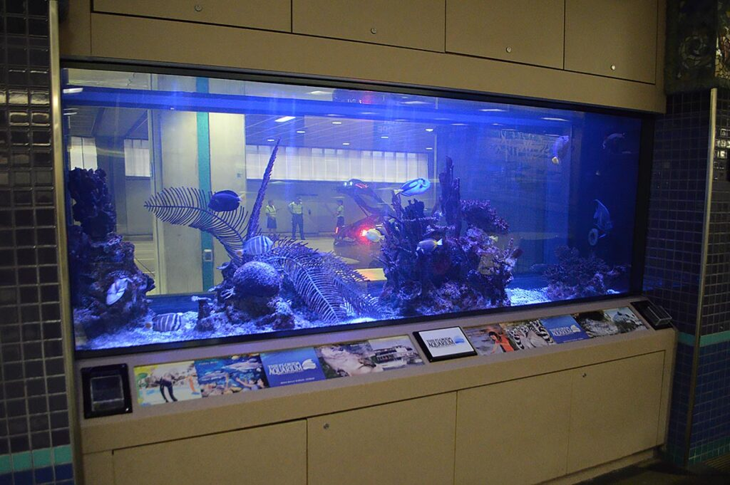 The dim, heavily blue-lit display housed many surgeonfishes, a departure from the selection of native fishes seen in the video from 2016.