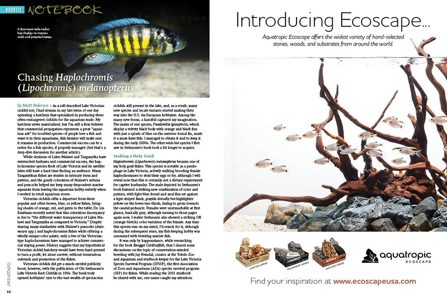 "How easily can a fish be nearly lost and found and all but lost again? Sr. Editor and Publisher Matt Pedersen shares his quest for a personal holy-grail cichlid from Lake Victoria—Haplochromis (Lipochromis) melanopterus—a colorful paedophage that briefly saw commercial availability in the aquarium trade as the ""Melon Hap""."