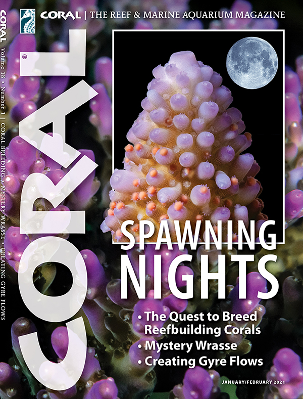 Cover of CORAL Magazine Volume 18, Issue 1 – SPAWNING NIGHTS – January/February 2021. On the cover: Acropora spp. corals: Blue Planet Archive/Doug Perrine (inset, coral with egg and sperm bundles); Marc Chamberlain (background). Full moon: Dundanim/Shutterstock.