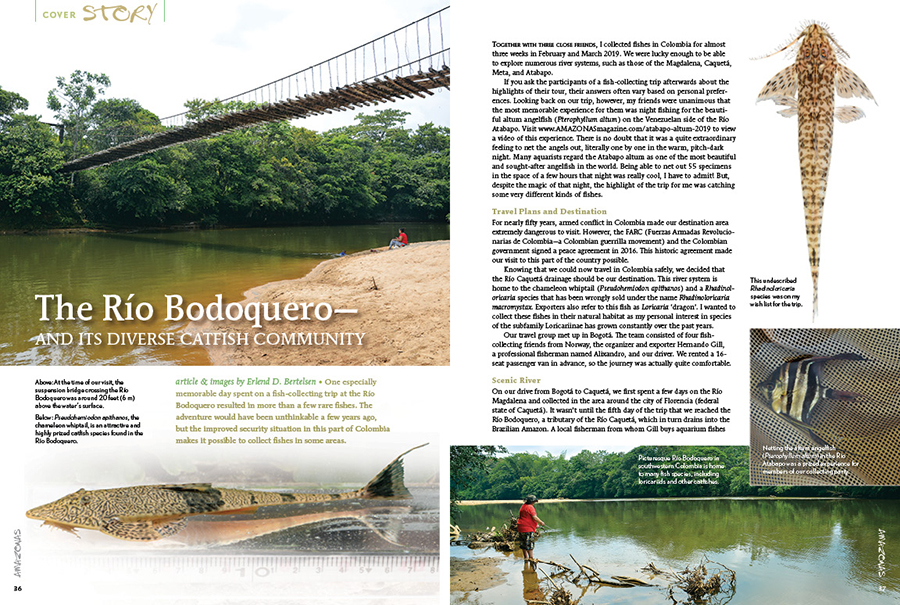 An adventure to the Río Bodoquereo would have been unthinkable a few years ago, but the improved security situation in this part of Colombia made it possible to collect fishes in some areas. Erlend D. Bertelsen shares what he and his travel companions discovered.