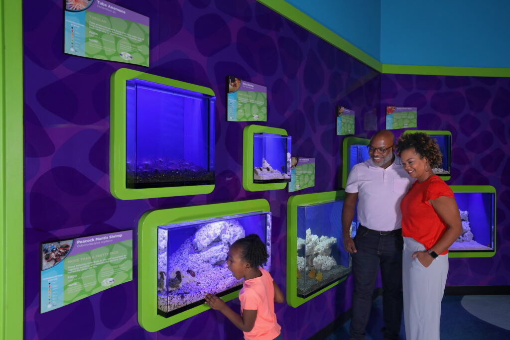 """Guests enjoying small aquaria in the """"Observation Station"""" exhibit."""