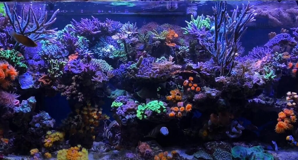 SPS up top, and NPS underneath: Rich Ross's reef tank continues to captivate!