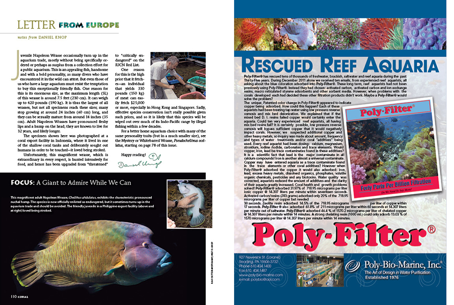 We close our first issue for 2021 with Daniel Knop's Letter from Europe. Knop reminds us to watch out for the endangered Napolean Wrasse, Cheilinus undulatus, within the aquarium trade. Capable of reaching 7.5 feet (230 cm) in length, it has no business in any home aquarium.