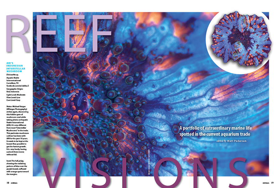 REEF VISIONS: A portfolio of extraordinary reef life spotted in the current aquarium trade. Michael Vargas teams up with Aquatic Realm International to showcase this amazing Indonesian Interstellar Discosoma.