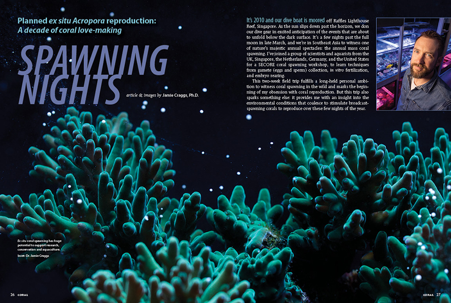 SPAWNING NIGHTS: the article from Dr. Jamie Craggs that introduces our 2021 issue featuring the sexual propagation of corals, a challenge that can now be tackled by even the home aquarist.