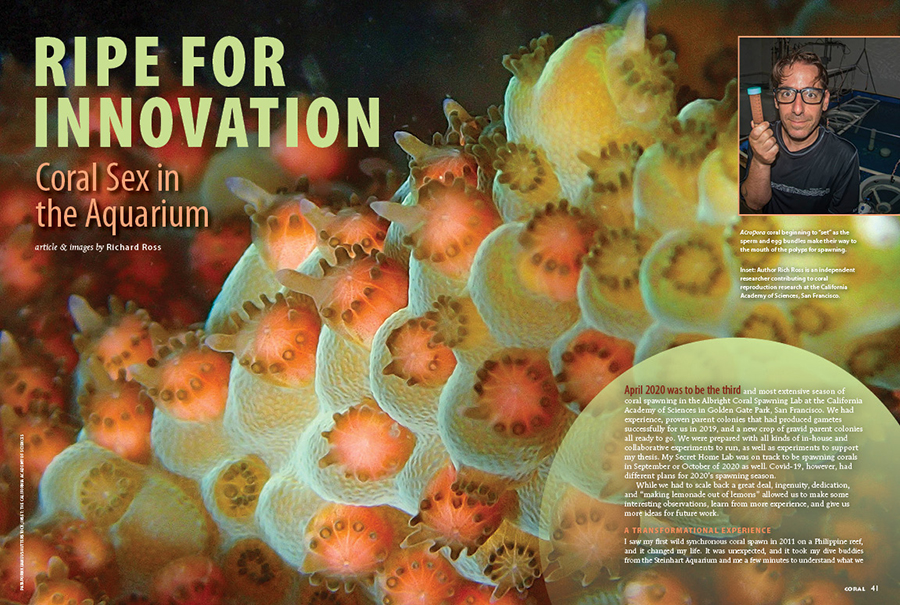 Richard Ross documents a challenging year of coral breeding at the Albright Coral Spawning Lab, and his Secret Home Lab, in Ripe for Innovation. Read it in the January/February 2021 issue of CORAL Magazine.