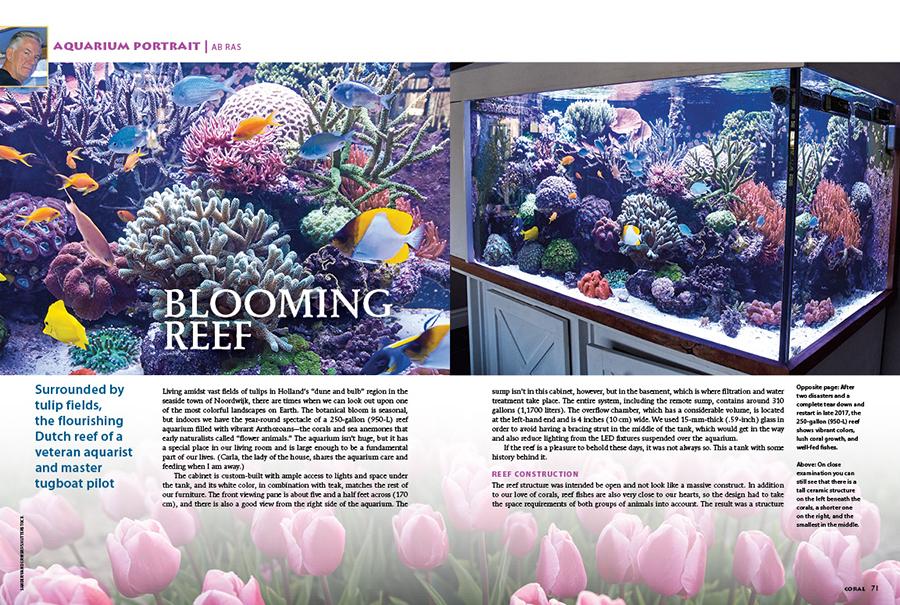Surrounded by tulip fields, the flourishing Dutch reef aquarium of veteran aquarist and tugboat pilot Ab Ras is this issue's Aquarium Portrait.